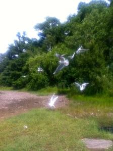 Feeding the gulls.