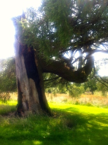 A tree of yin and yang