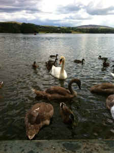 Feeding the birds at Talkin Tarn